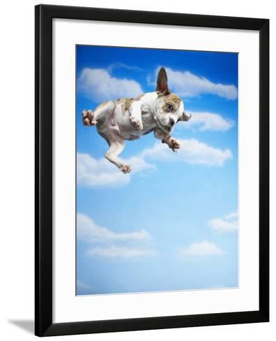 Flying Bulldog Puppy-Lew Robertson-Framed Art Print