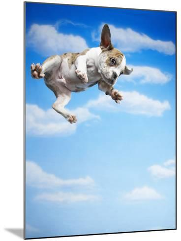 Flying Bulldog Puppy-Lew Robertson-Mounted Photographic Print