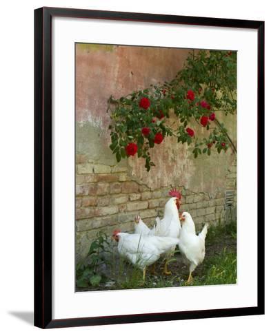 White chickens beneath roses-Mark Bolton-Framed Art Print