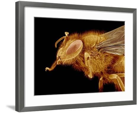 Head of a Honeybee-Micro Discovery-Framed Art Print