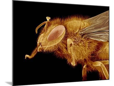 Head of a Honeybee-Micro Discovery-Mounted Photographic Print