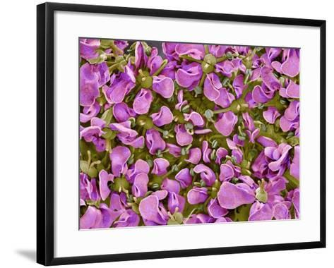 Flower of a parsley plant-Micro Discovery-Framed Art Print