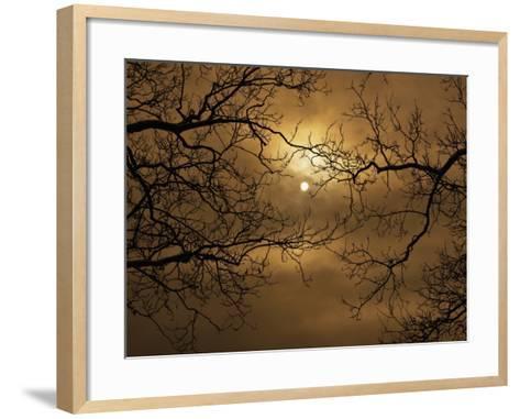Branches Surrounding Harvest Moon-Robert Llewellyn-Framed Art Print