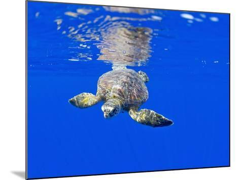 Underwater View of Green Sea Turtle-Paul Souders-Mounted Photographic Print