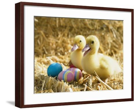 Pair of ducklings with Easter eggs-Ada Summer-Framed Art Print