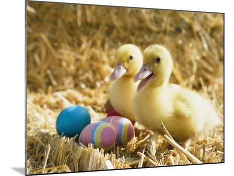 Pair of ducklings with Easter eggs-Ada Summer-Mounted Photographic Print