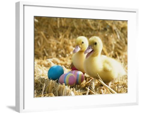 Pair of ducklings with Easter eggs-Ada Summer-Framed Art Print