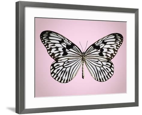 Paper-kite butterfly--Framed Art Print