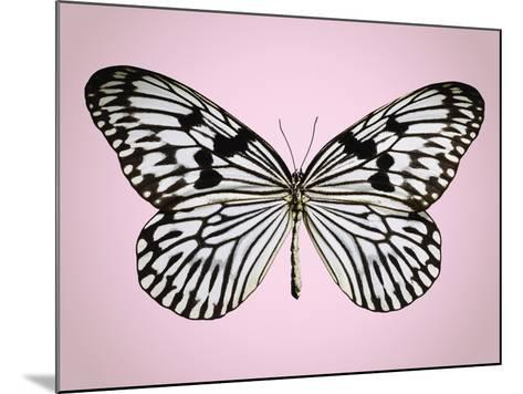 Paper-kite butterfly--Mounted Photographic Print
