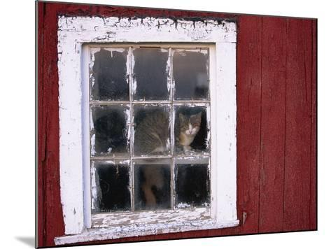 Cat sitting in a barn window-Scott Barrow-Mounted Photographic Print