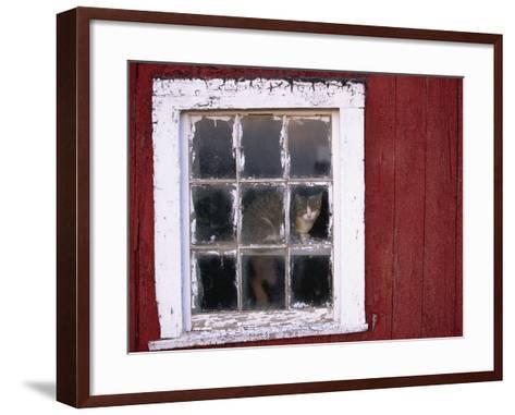 Cat sitting in a barn window-Scott Barrow-Framed Art Print
