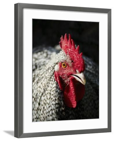 Male chicken-Louis Laurent Grandadam-Framed Art Print