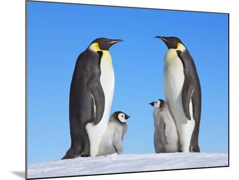 Emperor Penguins with Chicks-Frank Krahmer-Mounted Photographic Print