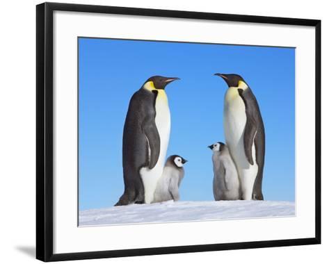 Emperor Penguins with Chicks-Frank Krahmer-Framed Art Print