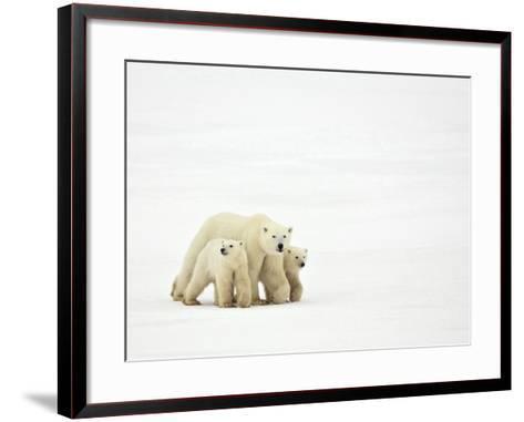 Mother and Cubs Walking-John Conrad-Framed Art Print
