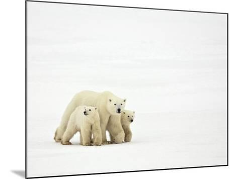 Mother and Cubs Walking-John Conrad-Mounted Photographic Print