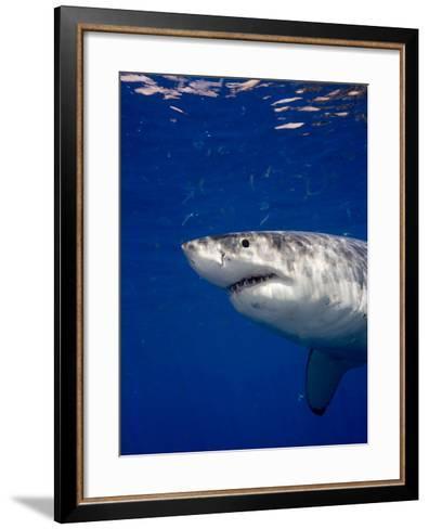 Great White Shark-Stephen Frink-Framed Art Print