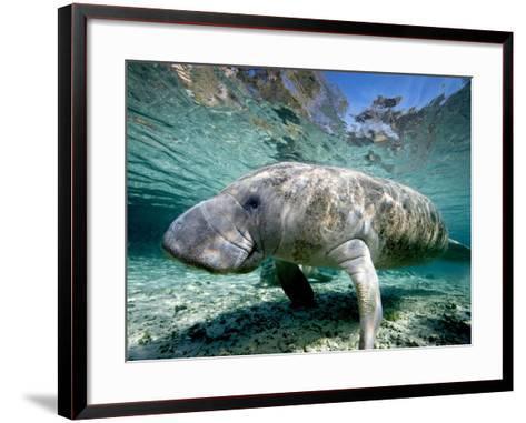 Florida Manatee-Stephen Frink-Framed Art Print
