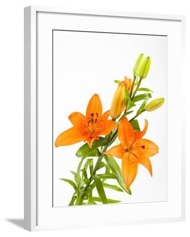 Orange lilies-Frank Lukasseck-Framed Art Print