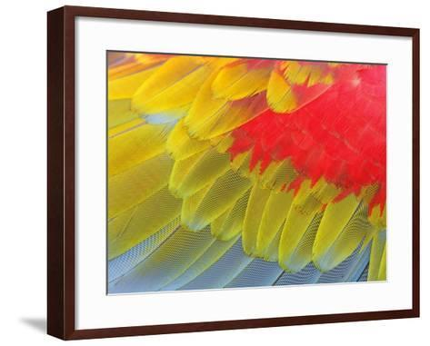 Feathers of a Scarlet Macaw-Arthur Morris-Framed Art Print
