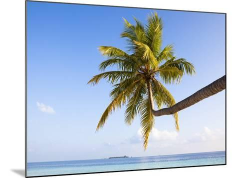 Coconut palm tree by the lagoon-Frank Lukasseck-Mounted Photographic Print