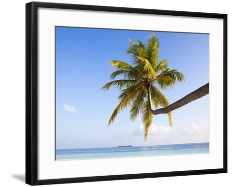 Coconut palm tree by the lagoon-Frank Lukasseck-Framed Art Print