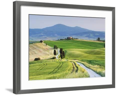 Rural Road Through Corn Fields and Cypress Trees-Frank Krahmer-Framed Art Print