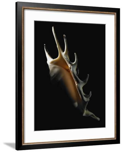 Conch Shell--Framed Art Print