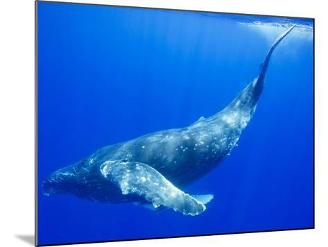 Humpback Whale Underwater-Paul Souders-Mounted Photographic Print