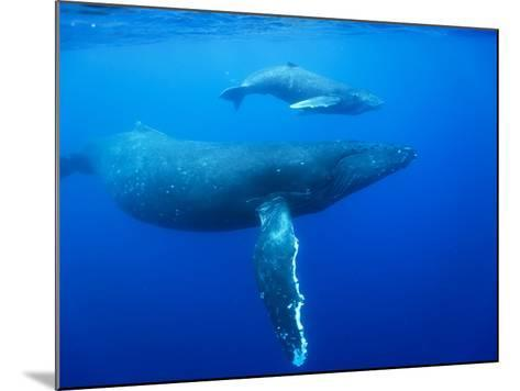 Humpback Whale Cow and Calf Underwater-Paul Souders-Mounted Photographic Print