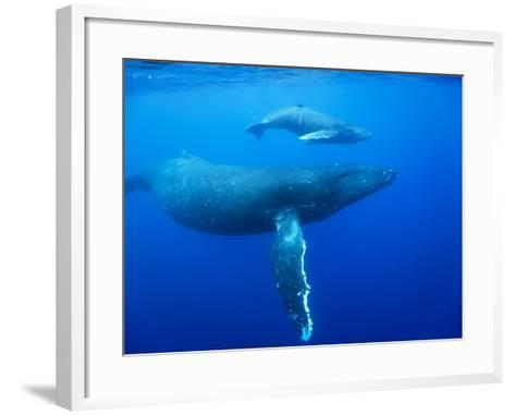 Humpback Whale Cow and Calf Underwater-Paul Souders-Framed Art Print