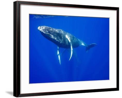 Humpback Whales Underwater-Paul Souders-Framed Art Print