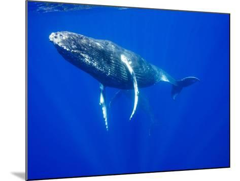 Humpback Whales Underwater-Paul Souders-Mounted Photographic Print