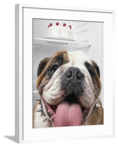 Bulldog in front of refrigerator-Ada Summer-Framed Art Print