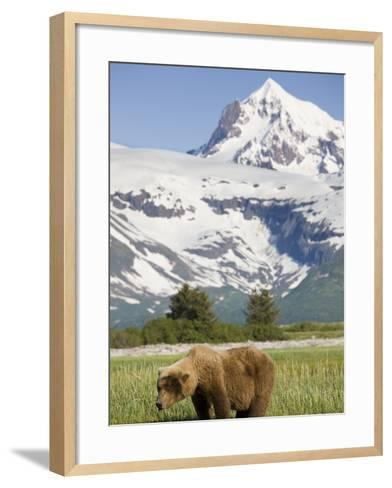 Grizzly Bear Eating Sedge Grass in Meadow at Hallo Bay-Paul Souders-Framed Art Print