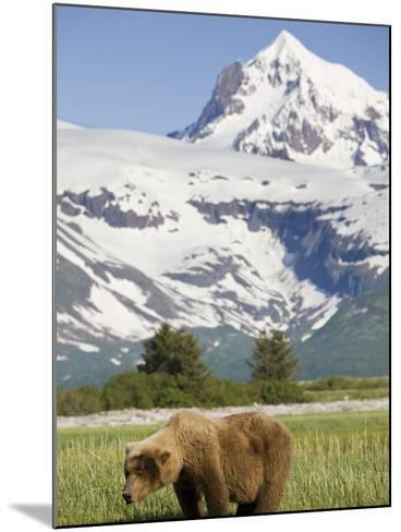 Grizzly Bear Eating Sedge Grass in Meadow at Hallo Bay-Paul Souders-Mounted Photographic Print