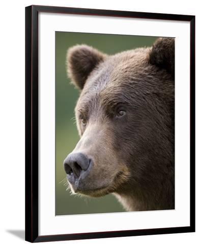 Brown Bear at Kinak Bay in Katmai National Park-Paul Souders-Framed Art Print