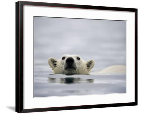 Swimming Polar Bear at Half Moon Island in Svalbard-Paul Souders-Framed Art Print