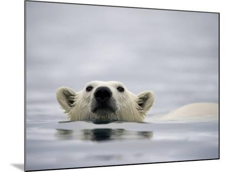Swimming Polar Bear at Half Moon Island in Svalbard-Paul Souders-Mounted Photographic Print