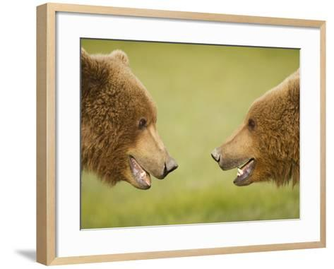 Brown Bears Facing Off at Hallo Bay-Paul Souders-Framed Art Print