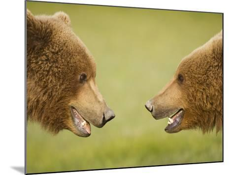 Brown Bears Facing Off at Hallo Bay-Paul Souders-Mounted Photographic Print