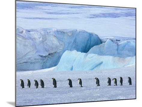 Emperor penguin group with iceberg-Frank Krahmer-Mounted Photographic Print