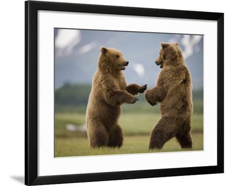 Grizzly Bears Sparring at Hallo Bay in Katmai National Park-Paul Souders-Framed Art Print