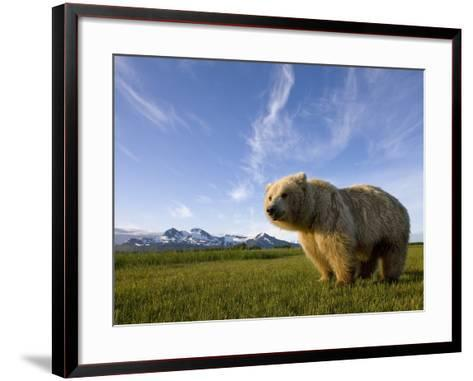 Grizzly Bear in Meadow at Hallo Bay in Katmai National Park-Paul Souders-Framed Art Print