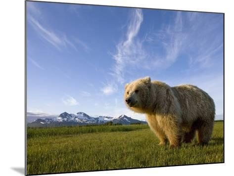 Grizzly Bear in Meadow at Hallo Bay in Katmai National Park-Paul Souders-Mounted Photographic Print