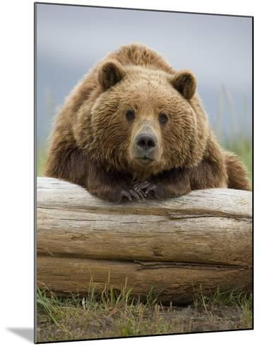 Grizzly Bear Leaning on Log at Hallo Bay-Paul Souders-Mounted Photographic Print