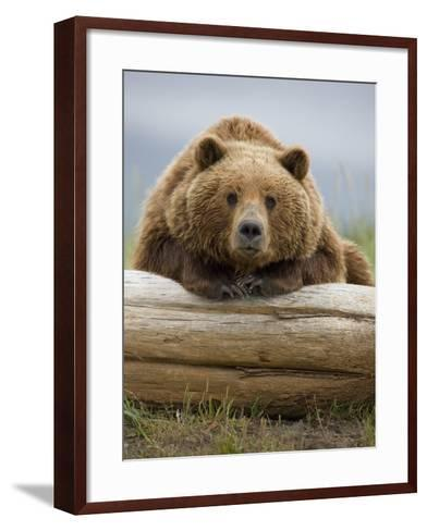 Grizzly Bear Leaning on Log at Hallo Bay-Paul Souders-Framed Art Print