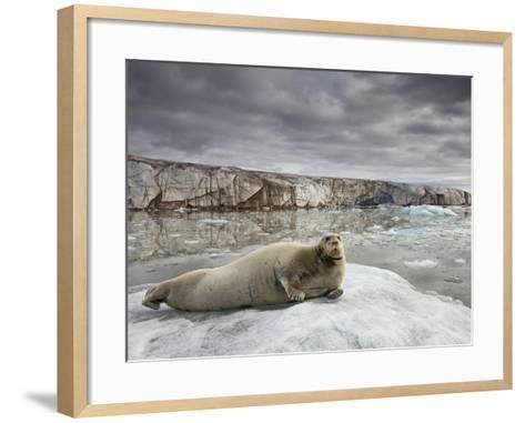 Bearded Seal on Iceberg in the Svalbard Islands-Paul Souders-Framed Art Print