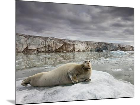Bearded Seal on Iceberg in the Svalbard Islands-Paul Souders-Mounted Photographic Print