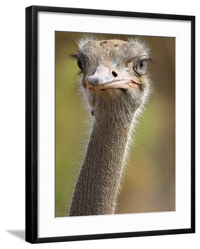 Common Ostrich-William Manning-Framed Art Print